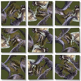 Puzzle Solution for Scramble Squares - Alligators