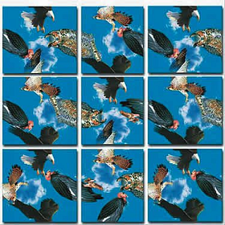 Puzzle Solution for Scramble Squares - Birds of Prey