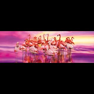 Panorama: Flamingo Dance