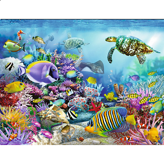 Coral Reef Majesty