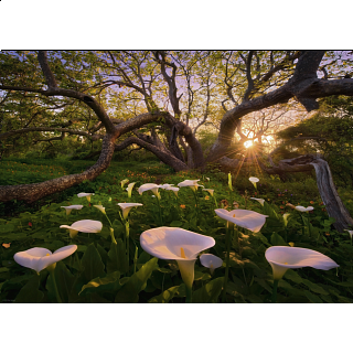 Magic Forests: Calla Clearing