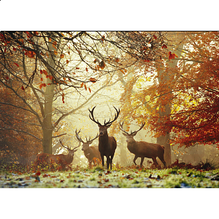 Magic Forests: Stags