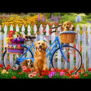 Pedal Pups
