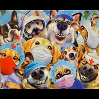 Selfies: Dog Doctors