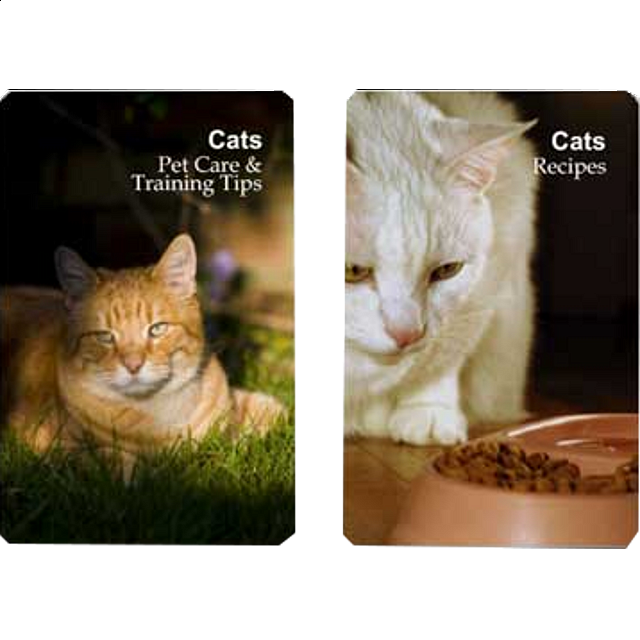 playing-cards-cat-pet-care-training-tips-recipes