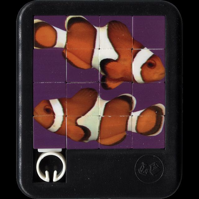 brilliant-creatures-clown-fish