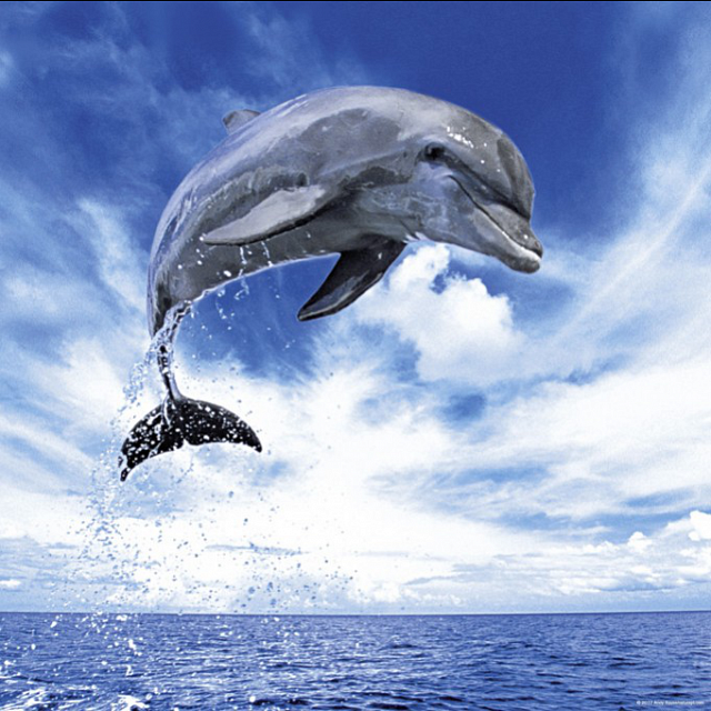 weing-ar-ten-edition-dolphin