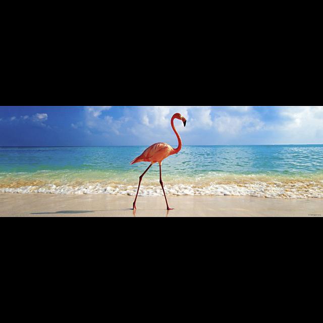 avh-panorama-flamingo