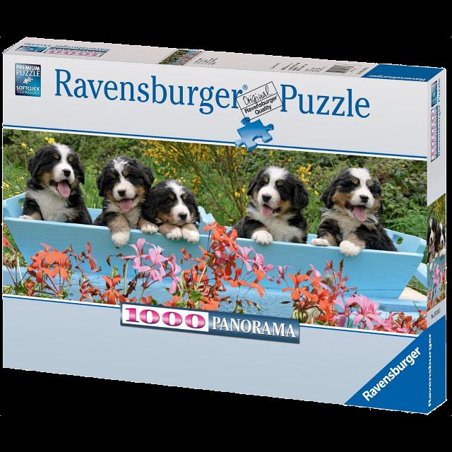 panorama-bernese-mountain-dogs
