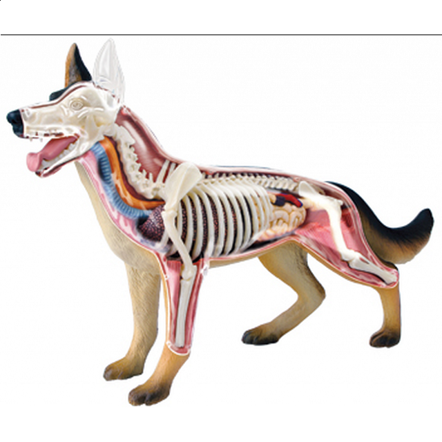 4D Vision - Dog Anatomy Model | | Puzzle Master Inc