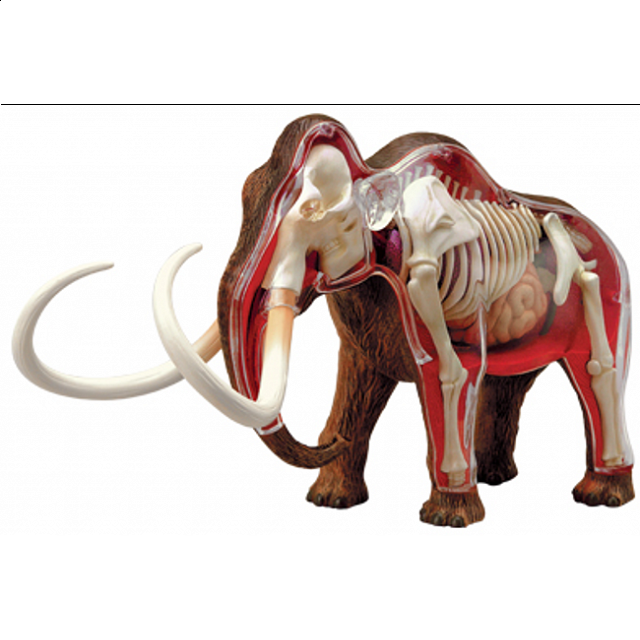 4d-vision-woolly-mammoth-anatomy-model