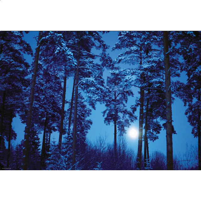 magic-forests-full-moon