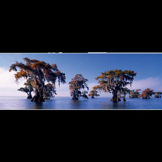 avh-panorama-bald-cypresses