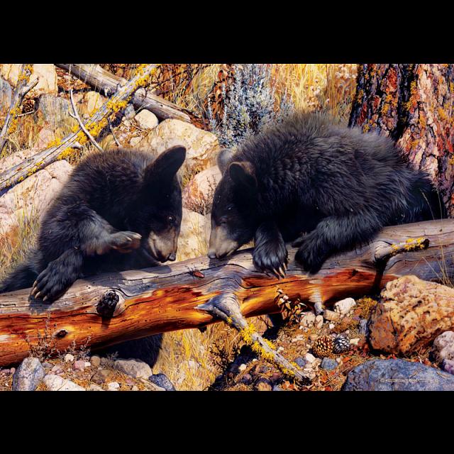animal-planet-black-bear