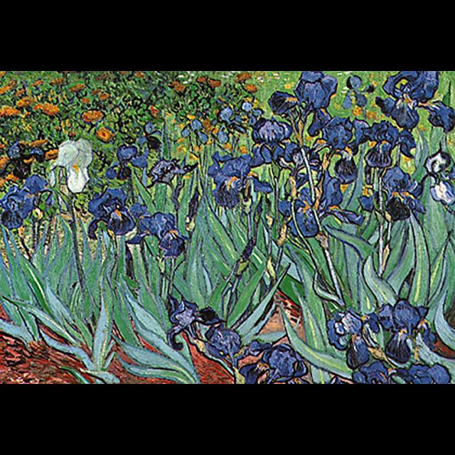 vincent-van-gogh-irises