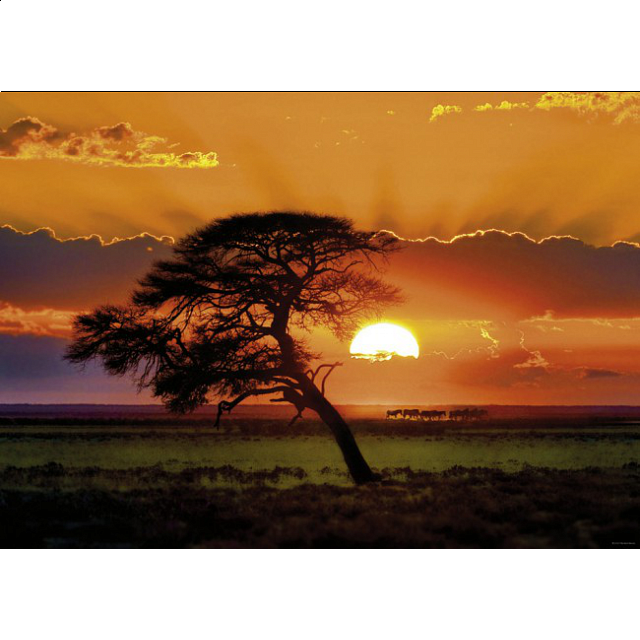 sunlight-sunny-tree