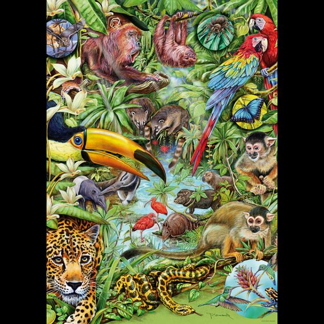 flora-fauna-rainforest