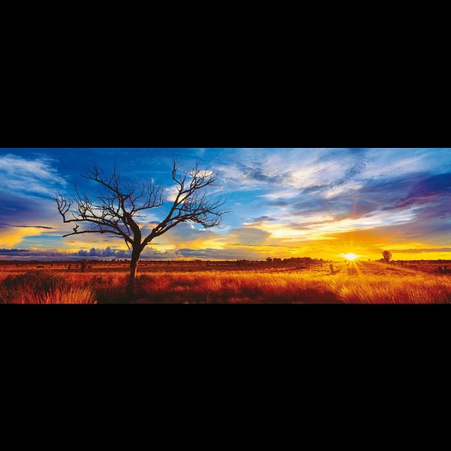 panorama-desert-oak-at-sunset