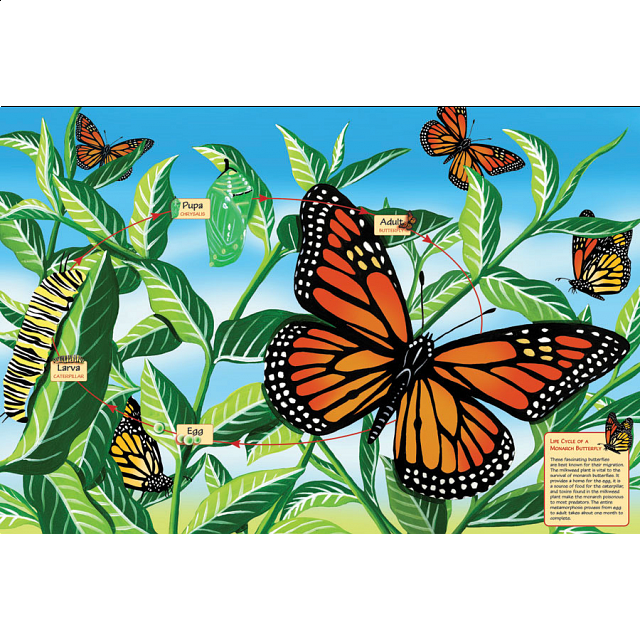 floor-puzzle-life-cycle-of-a-monarch-butterfly
