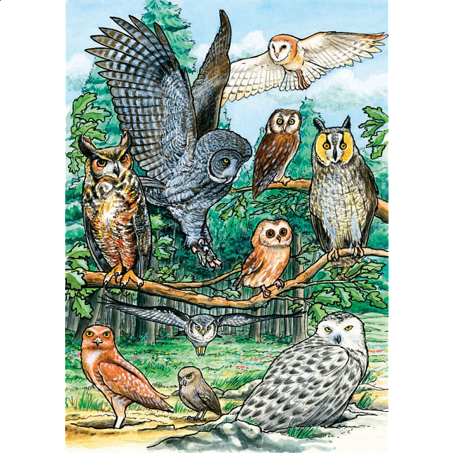 north-american-owls-tray-puzzle
