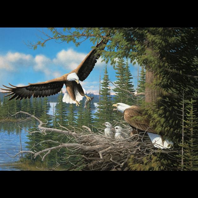 nesting-eagles