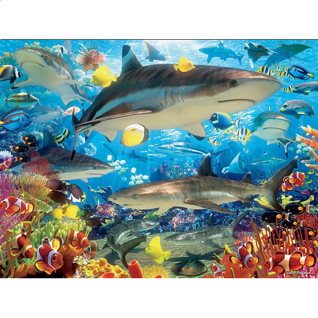 reef-sharks