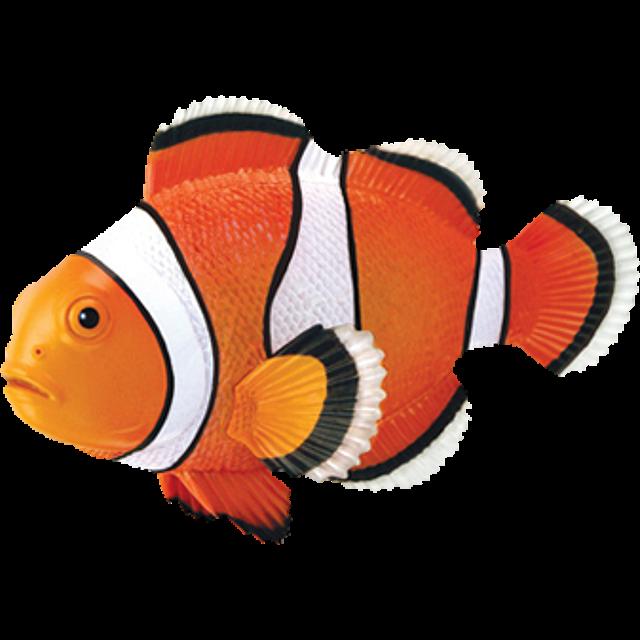 4d-puzzle-clownfish