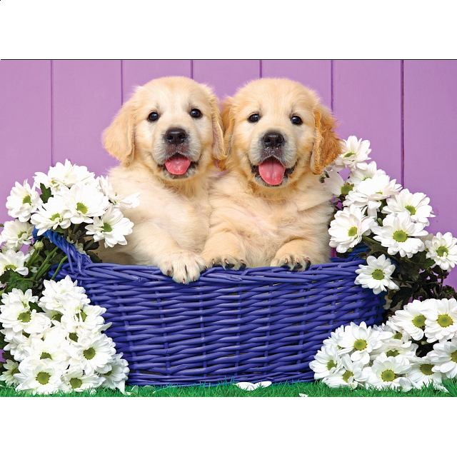 Colorluxe: Puppy Basket