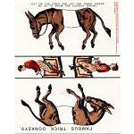 Famous Trick Donkeys - Postcard image