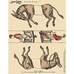 Famous Trick Donkeys - Color - Japanese
