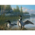 Common Loons image