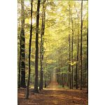 Forest Path image