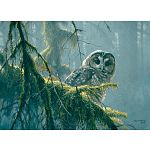 Mossy Branches : Spotted Owl - Large Piece image