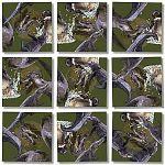 Scramble Squares - Alligators