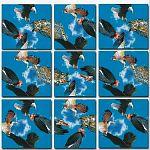 Scramble Squares - Birds of Prey