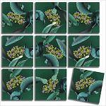 Scramble Squares - Manatees