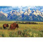 Grand Teton National Park image
