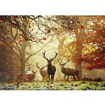 Magic Forests: Stags image