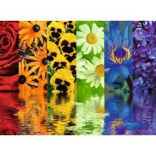 Floral Reflections -