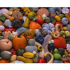 Autumn Harvest -